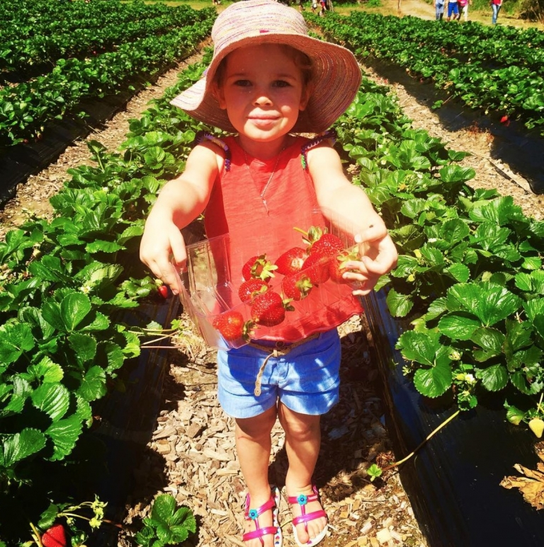 Christiane Duigan's daughter picking strawberries